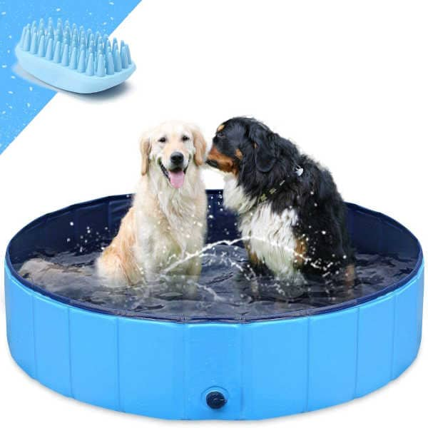 piscina para perros españoles